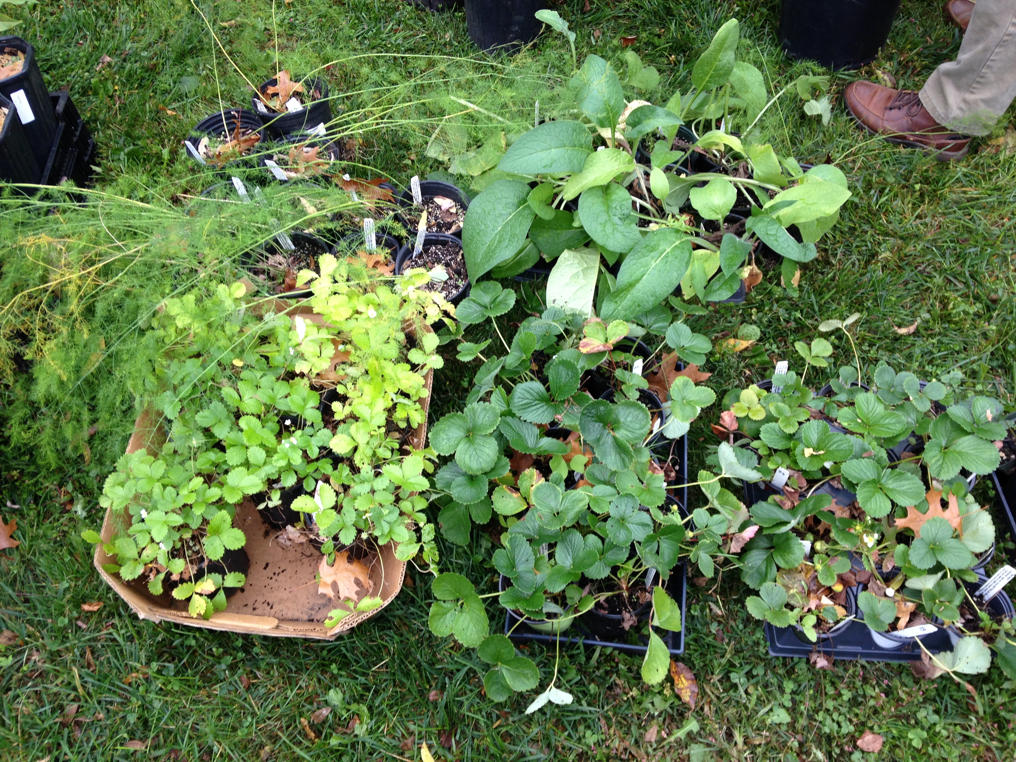 pop plant sale and the start of a backyard forest garden u2013 philly
