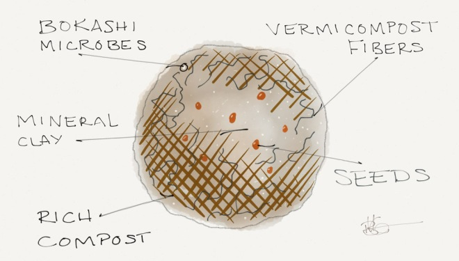 seedBallAnatomy(1)